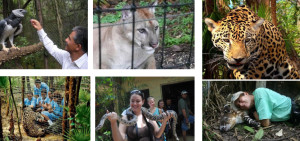 The Belize Zoo Tour