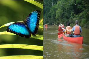 Macal River Canoeing Tour, Natural History Museum & Blue Morpho Butterfly Breeding Center at Chaa Creek Lodge